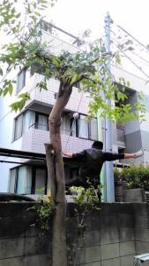 木アフター