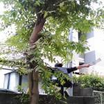 管理物件 落ち葉問題 木コリイオン(´д`)