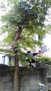 木ビファー